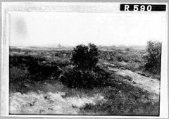 Landschap met landweg en struiken
