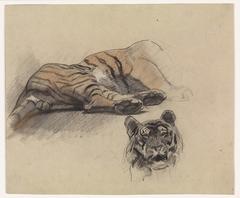 Liggende tijger, en kop van een tijger
