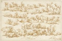 Studies van schapen