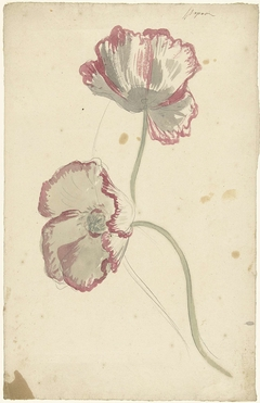 Two Studies of a Poppy