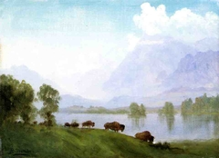 Buffalo Country