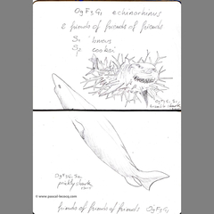 Carnet Bleu: Encyclopedia of…shark, vol.VIII p22 by Pascal