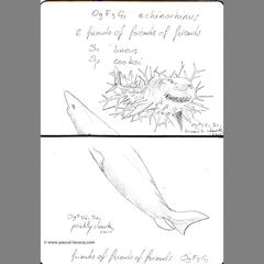 Carnet Bleu: Encyclopedia of…shark, vol.VIII p22 by Pascal