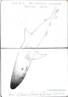 Carnet Bleu: Encyclopedia of...shark, vol.X p 10 - by Pascal