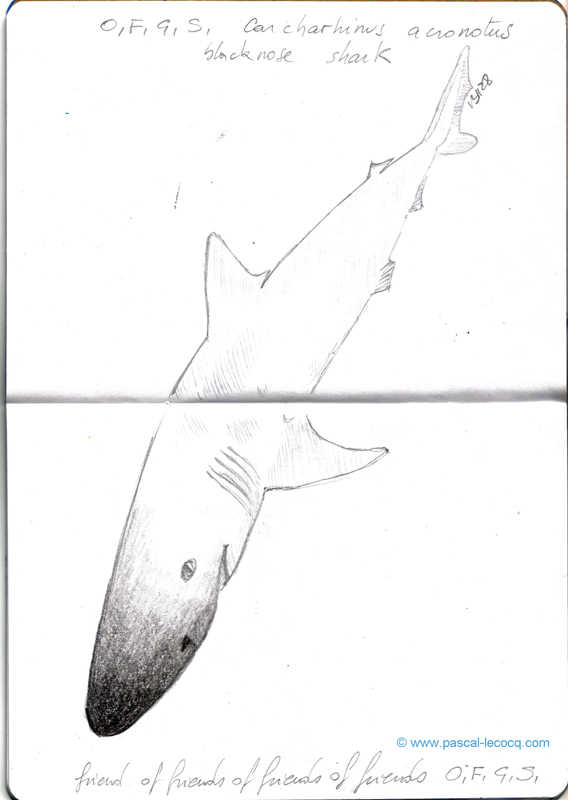 Carnet Bleu: Encyclopedia of...shark, vol.X p 10 - by Pascal