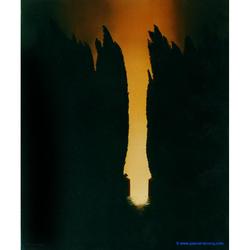 CYPRES D'HADES - Cypress of Hades/ So close Hades - by Pascal
