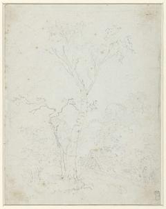 Landschap met wijdvertakte boom