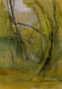 Old Trees, Faeron's Bush, Motueka
