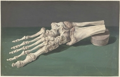Skelet van een voet