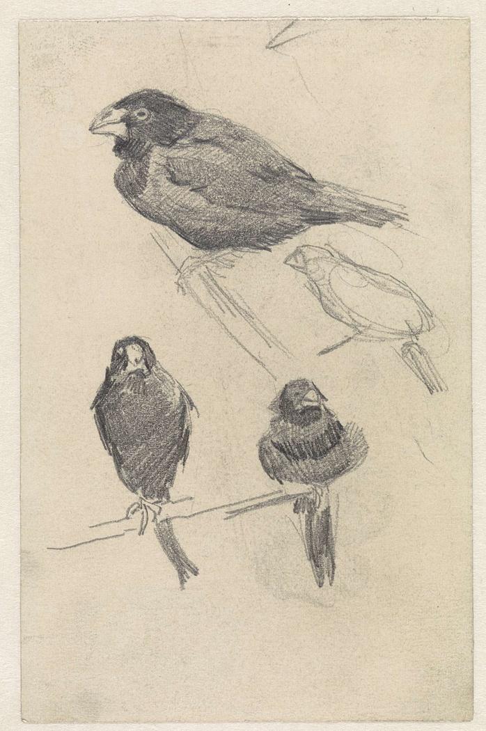 Studieblad met kleine vogels
