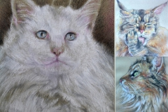 the cats in pastel