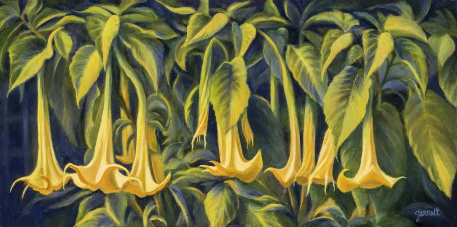 Trumpet Flowers - Fleurs trompettes