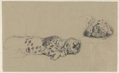 Twee studies van een luipaard