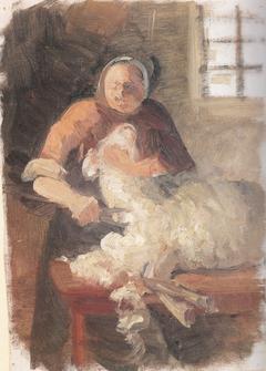 A woman shearing a sheep