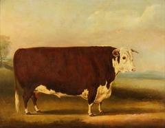 Hereford Bull 'Walford'