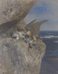 Slechtvalk met nonnetje als prooi bij zijn nest aan de kust