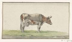 Staande koe, naar rechts