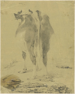 Staande koe, van achteren