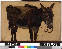 Studie van een ezel