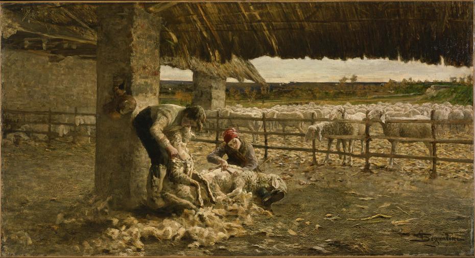 The Sheepshearing
