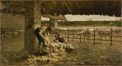 The Sheepshearing