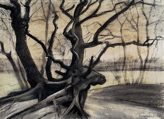 Tree roots in a sandy ground ('Les racines')