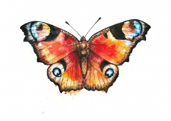Watercolour butterfly II