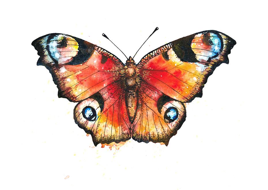 Watercolour butterfly II