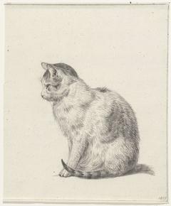 Zittende kat, naar links