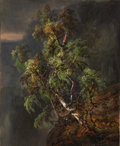 Birch Tree in a Storm