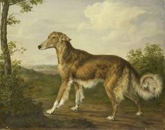 Siberian Greyhound
