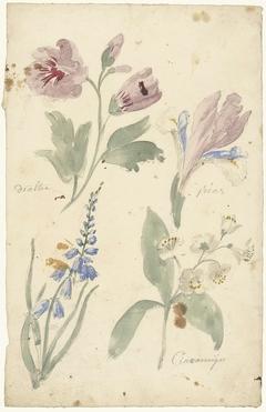 Studies van bloemen waaronder een iris