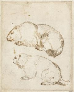 Twee marmotten