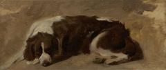 A Spaniel Lying Down