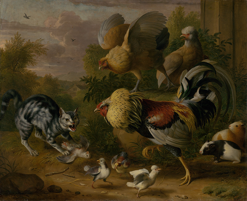 Cat among roosters