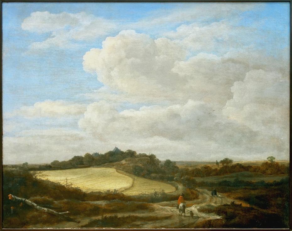 Hilly wheat field