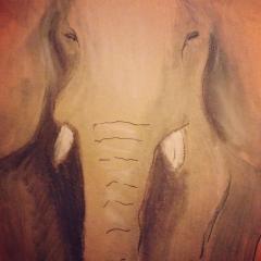 Lines of elephant