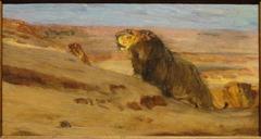 Lions in the Desert