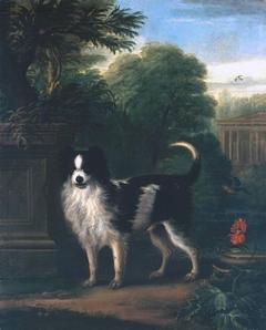 Muff, a Black and White Dog