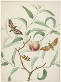 Perzik aan een tak met twee uitheemse vlinders en een libel