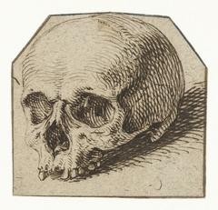 Studie van een schedel