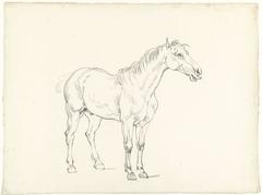Studie van een staand paard, naar rechts