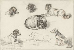 Studies of Dogs