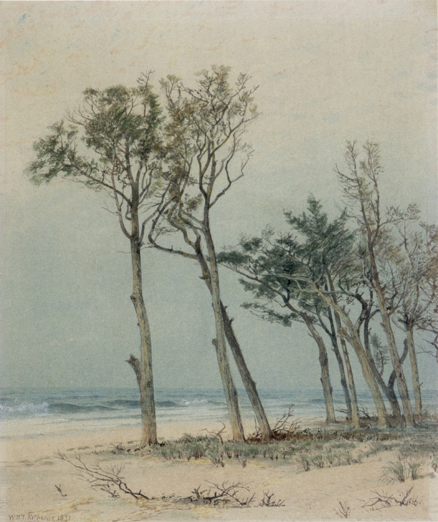 Trees on the Jersey Shore