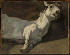 White horse stretched on the ground