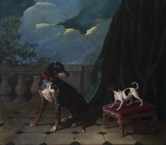 Deux chiens sur une terrasse