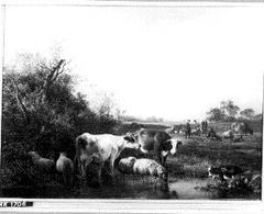 Koeien en schapen bij een vijver