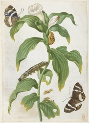 Plant study with butterflies