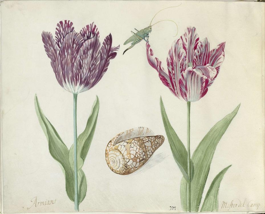 Twee tulpen, een schelp en een sprinkhaan
